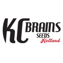 KC Brains - Seed Bank
