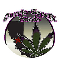 Purple Caper Seeds - Seed Bank