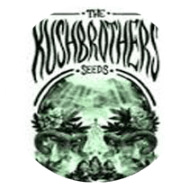 The Kush Brothers Seeds - Seed Bank