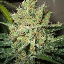 Pure Power Plant - PPP